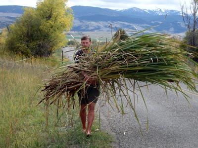Collecting cattail leaves for a basket-making class.